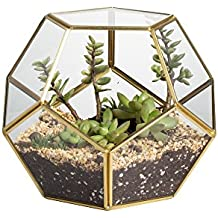 terrarium plante. Black Bedroom Furniture Sets. Home Design Ideas