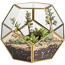 suchergebnis auf f r pflanzen terrarium. Black Bedroom Furniture Sets. Home Design Ideas