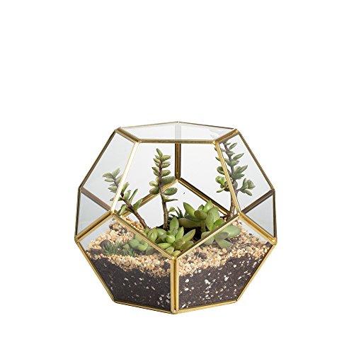 Transparentes fünfeckiges Dodekaeder Glas, Terrarium, auch für Sukkulenten