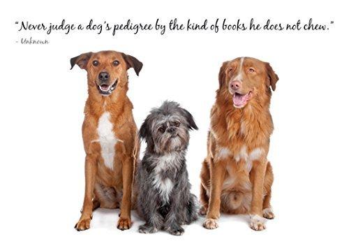 never-judge-a-dog-pedigree-adorabile-con-scritta-dog-collection