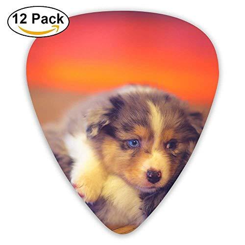 12-Pack Custom Guitar Picks Cute Dogs Puppy Play Game Standard Bass Guitarist Music Gifts