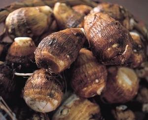 有機栽培 上庄の里芋2kg