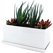 Parva Garden Vaso per piante grasse e aromatiche con vassoio rimovibile, finestra in un moderno design in ceramica