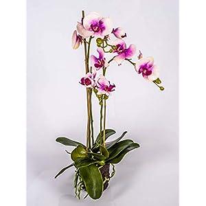 artplants.de Orquídea Phalaenopsis Artificial Pabla en Tierra, Rosa-Fucsia, 70cm – Planta Decorativa – Flores de plástico