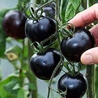 Yukio Samenhaus - 20 Stück Bio-Cherrytomate Fleischtomate Tschernij Prinz schwarz Tomatensamen fruchtig aromatisch