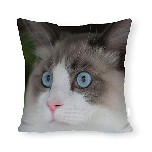 PotteLove Copertura del Cuscino Cucciolo Gatti Felis Catus Ragdoll Cute Kitty Pillow Case Canvas Home Decor Personalizzato Disponibile, Tela, 16 x 16 inch