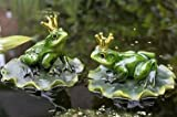 Jardin déco animaux natation grenouille grenouille roi trié