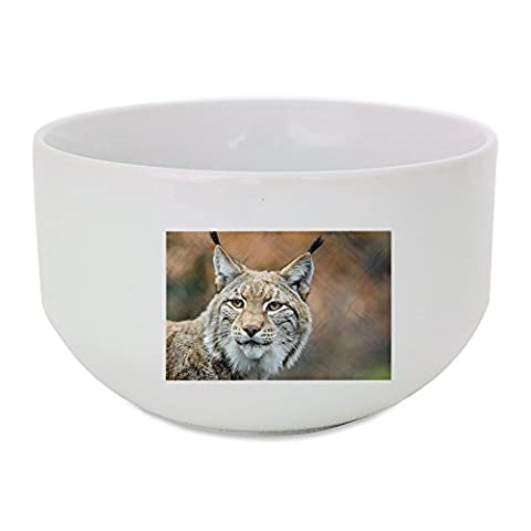 Lynx, Bobcat, Wildlife, Predator, Nature ceramic bowl (Bobcat Lynx)
