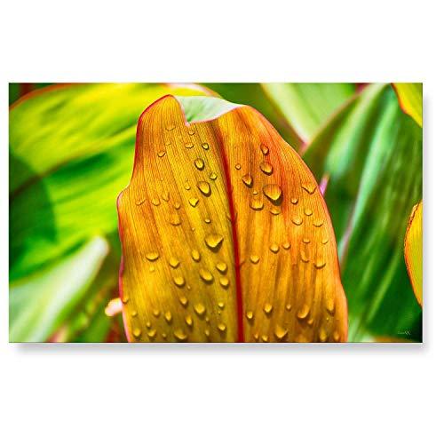 """LanaKK - Küchenrückwand - Glasbild\""""Blattgrün\"""" Blumen & Natur Edler Glas-Kunstdruck Hinter 6 mm starkem Sicherheitsglas - grün in 90 x 60 cm"""