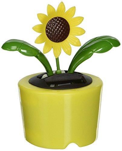 Solar Dancing Blume, Sonnenblume (gelb Topf)-Bubble Paket - Sonnenblume Bubble