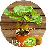 Big Promotion! Kiwi Seeds plantes en pot Mini Arbre riches arbres fruitiers Belle Bonsai Kiwi Seed, 100 graines / Pack, # IT5O18...