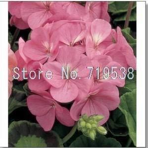 Potseed Freies Verschiffen 100pcs 10 Arten Begonia Samen Bio-Blooming-Blumensamen Gartenpflanze - Begonia-arten