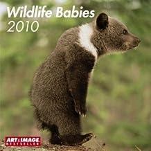 Wildlife Babies 2010. Broschürenkalender: 16-Monats-Kalender