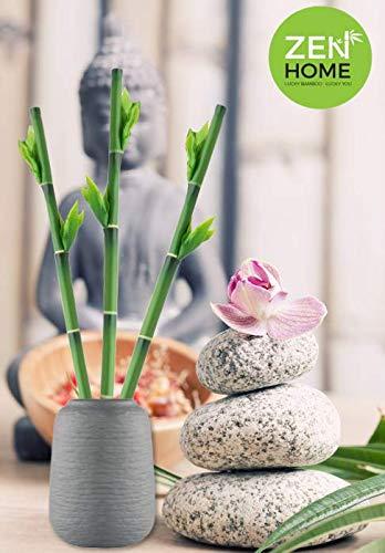 BAMBU DE LA SUERTE artificial, Plantas artificiales, plantas artificiales decorativas, decoración casa, plantas artificiales decoración, planta artificial, decoracion hogar, planta artificial bambu
