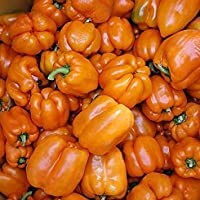 PlenTree 1/4 Semillas Gram Oragnic sobre Gourmet Pimienta Convencional y Orgánica