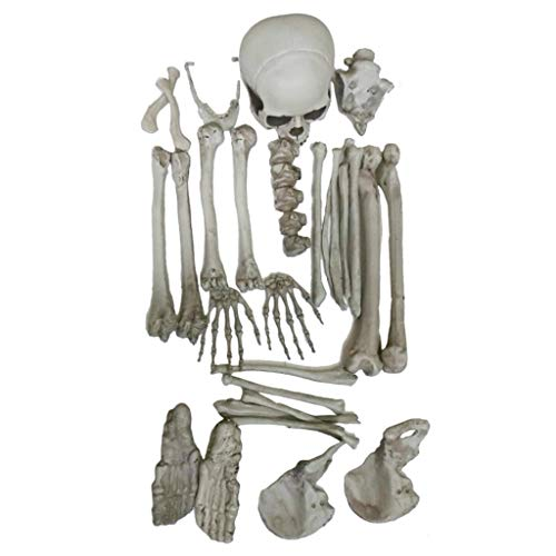 kelett/Dinosaurier-Eier Modell für Aquarium Ornament Halloween Bar Dekoration Sammlung ()