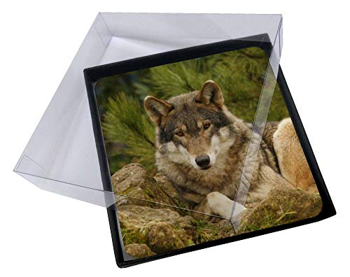 Advanta - Coaster Set 4X A Beautiful Wolf Bild Setzer gesetzt Wolf Coaster Set