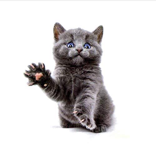 ruofengpuzi Niedliche Katze Blaue Augen Wasserdicht Temporäre Tätowierung Aufkleber Body Art Tattoo Schönheit Tier Tattoo Ärmel Temporäre Tätowierung Aufkleber (Augen Niedliche Make-up Halloween-katze)