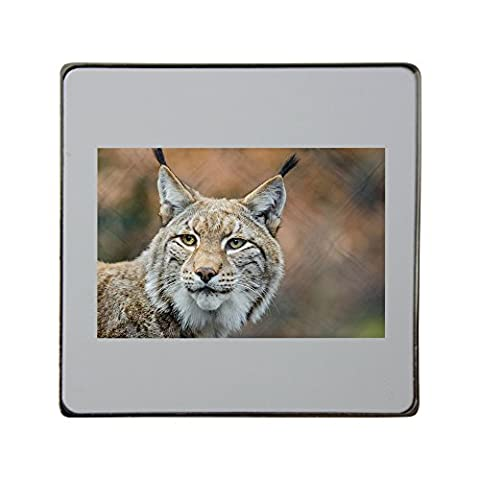 Lynx, Bobcat, Wildlife, Predator, Nature metal square fridge magnet (Bobcat Lynx)