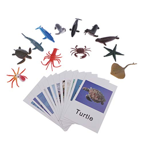 Montessori Ocean Animal Match Cards