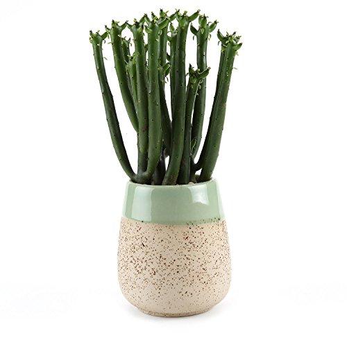 T4U 7.5CM Tontöpfe mit Glasur Sukkulenten Töpfe Kaktus Pflanze Töpfe Mini Blumentöpfe Beige Rund Schlank Design