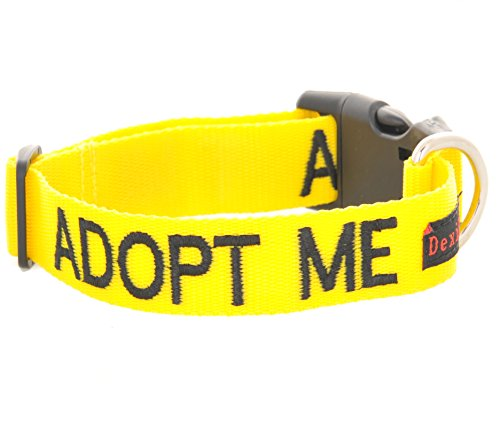 adopter-me-i-need-a-new-home-col-jaune-couleur-coded-l-xl-buckle-dog-faire-un-don-a-votre-organisme-