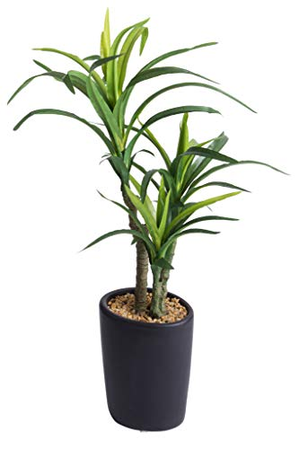 Botanic-Haus künstliche Pachira-Pflanze in Elegantem dunkelgrauen Keramiktopf