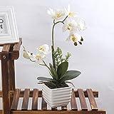 True Holiday Flores Artificiales de orquídea con jarrón de Porcelana Blanca, decoración de Centro de Bonsai Artificial, Flores de plástico, Realista y Realista
