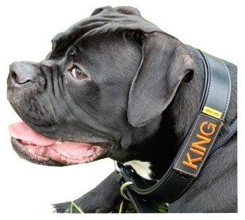 Halsbandtasche schwarz für Hundemarke