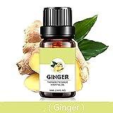 IngwerPflanze ätherisches Öl reines unverdünntes ätherisches Öl für Massage und HautPflege 10 ml (1/3 oz)