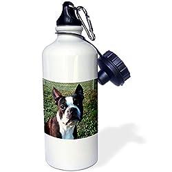 3dRose wb_49296_1 Boston Terrier Portrait Sports Water Bottle, 21 oz, White