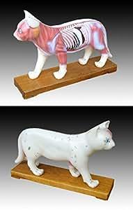 Mannequin d'acupuncture : les muscles du chat