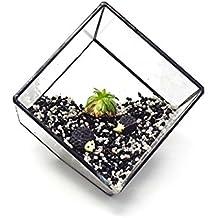 Ultra 10 Premium calidad cubo de vidrio terrario con un borde de corte perfecto para musgo y plantas o decoraciones (10)