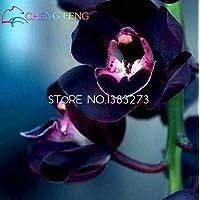 30 semi Unico rosa Cymbidium fiore Semi Garden Flowers Pots Camera Semi piante da fiore Orchid Seed Flores Plantes