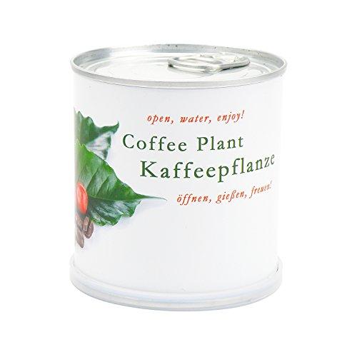 Kaffee - Blumen in der Dose von MacFlowers
