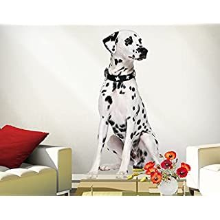 Wall Decal No.361 Sitting Dalmatian 50x95cm, Dimensions:95cm x 50cm