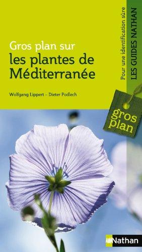 Plantes de méditerranée