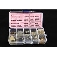 10pcs paleontológicos completa espécimen fósil con transparente caja de plástico colección Set