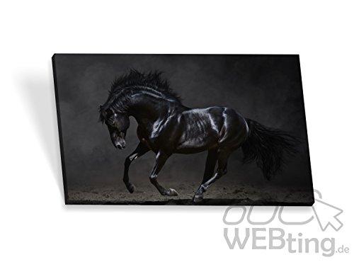Telaio Immagine poster cavallo tela quadri su