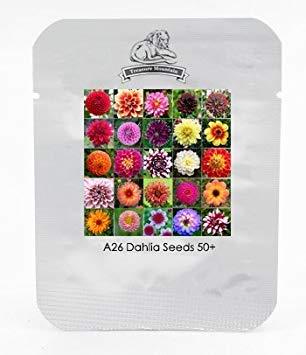 VISTARIC 6: 100 Samen/pack China Rare Blumensamen Bonsai Primrose Samen, Primula malacoides, Pflanzung Jahreszeiten, blühende Pflanzen -