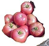 Ungarische Samen Tomate