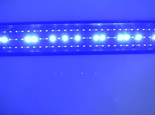 aquarien eco led aquarium fische tank beleuchtung aufsetzleuchte blau wei aquairum abdeckung. Black Bedroom Furniture Sets. Home Design Ideas