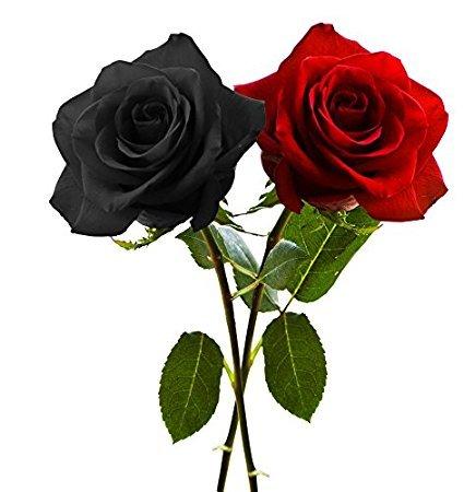 Multicolor NooElec Seeds India 6 Varieties Climbing Rose Flower Seeds