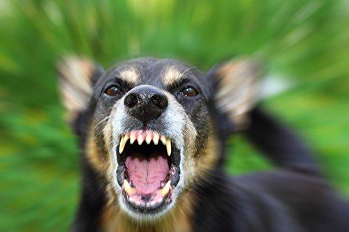ISOTRONIC Ultraschall Abwehr gegen Tauben Vögel Katzen Hunde Marder Tierabwehr - 5