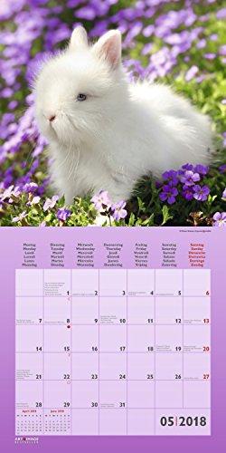 Kaninchen 2018 – Tierkalender, Kaninchen-Kalender, Hasenkalender, Haustierkalender  –  30 x 30 cm - 6