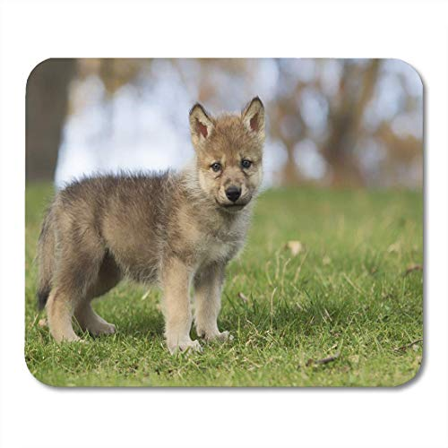 Deglogse Gaming-Mauspad-Matte, Baby Profile of Young Grey Wolf Pup Standing Mouse Pad, Desktop Computers mats