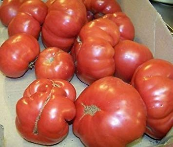 Fash Lady Tomate, RUTGERS, HEIRLOOM, 87 Samen! GroCo