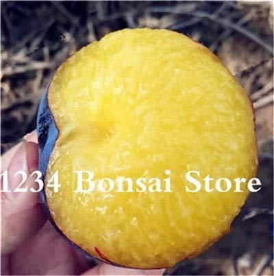 Bloom Green Co. Haute qualité 20 pcs Rare Noir Brin prune Bonsai fruit délicieux douce bio arbre & quot; krim noir & quot; pot fruits et légumes plante: 1