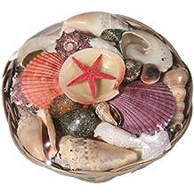 hibuy - Surtido de Conchas y Estrellas de mar