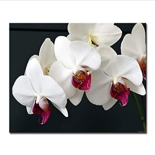 Schmetterlingsorchidee Farbe